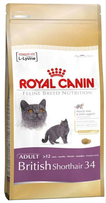 royal canin british shorthair suche karmy dla kot w kot kuchniapupila. Black Bedroom Furniture Sets. Home Design Ideas